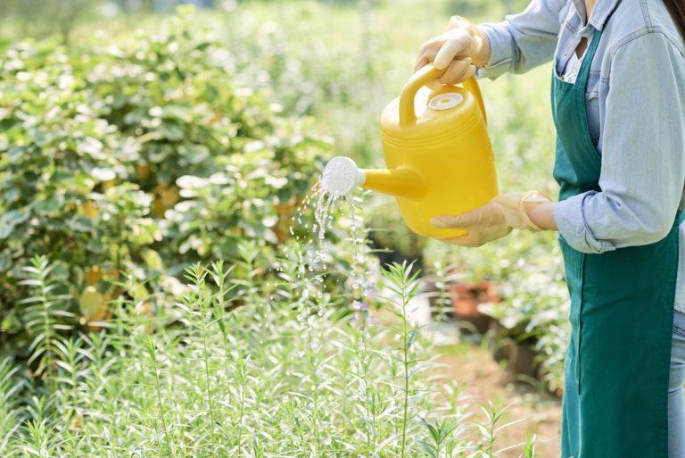 Красота и здоровье сада-огорода на загородном участке
